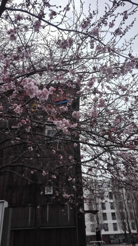 один мартовский день дизайнера в Берлине, фото 14