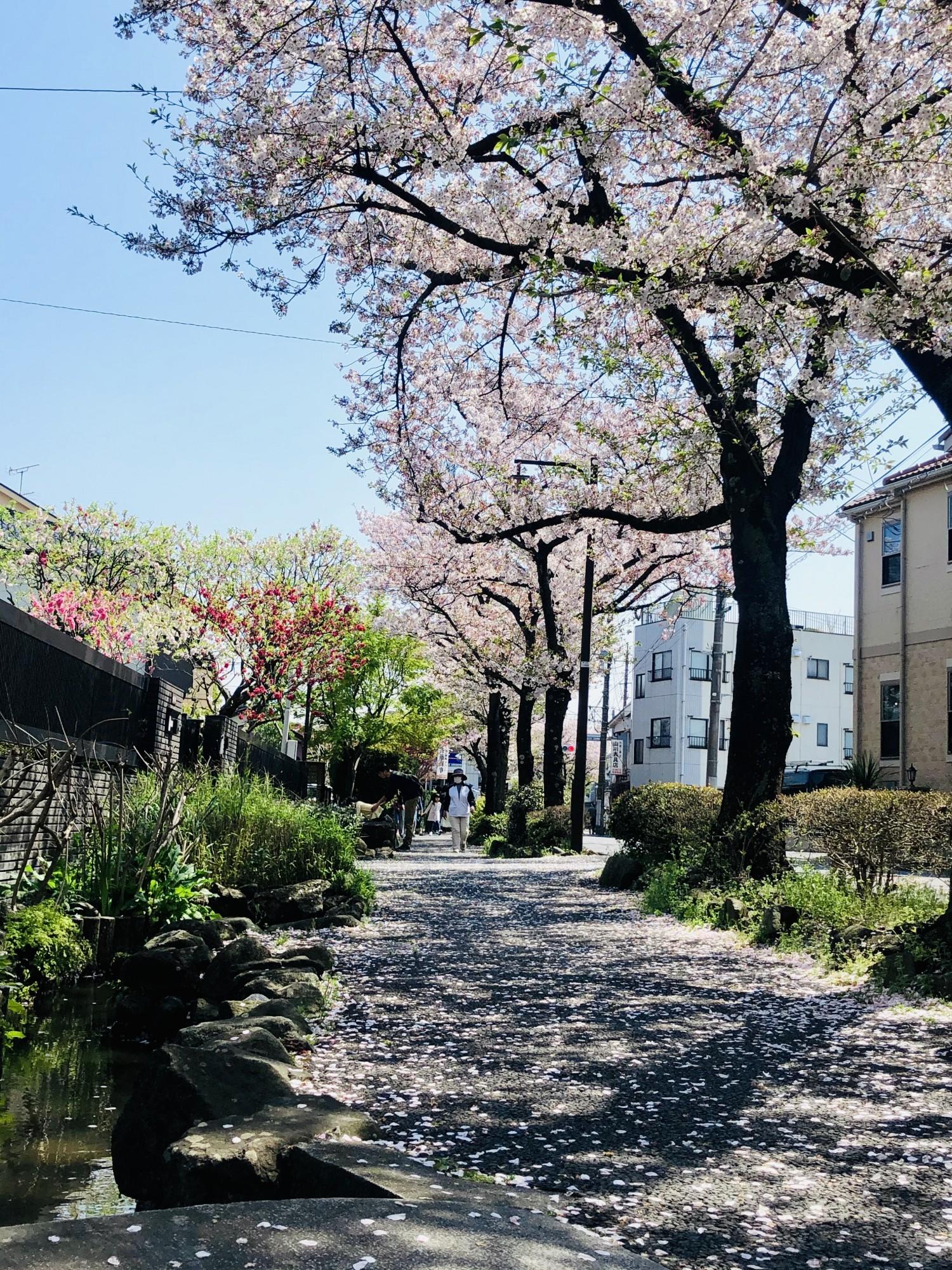 Один мой апрельский день на окраине Токио