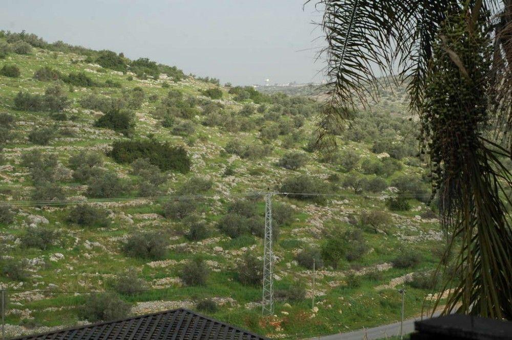 Один мой выходной день проведенный в пути, из Самарии в Палестину и назад, фото 4