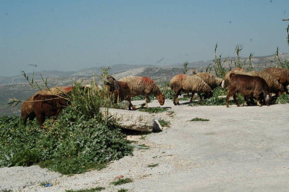 Один мой выходной день проведенный в пути, из Самарии в Палестину и назад, фото 46
