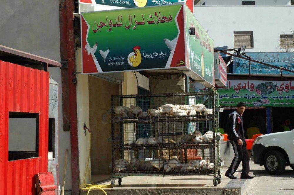 Один мой выходной день проведенный в пути, из Самарии в Палестину и назад, фото 50