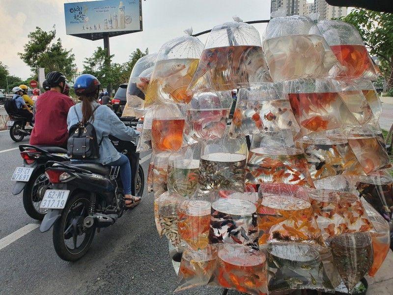 Один день учительницы английского языка в бескарантинном Вьетнаме, фото 33