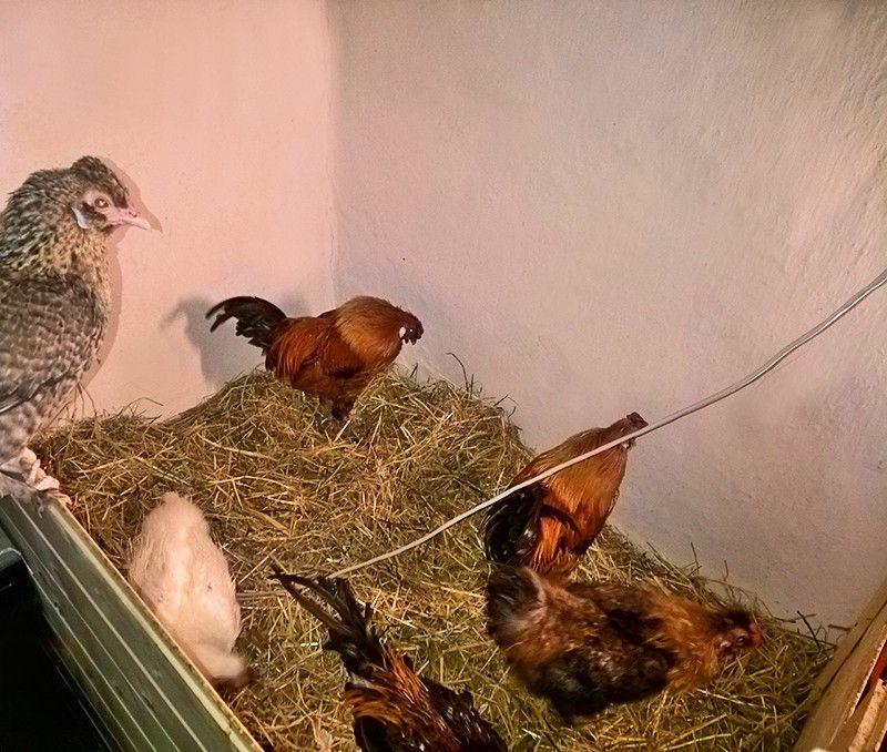Один мой рабочий день в птицами, Италия, фото 31