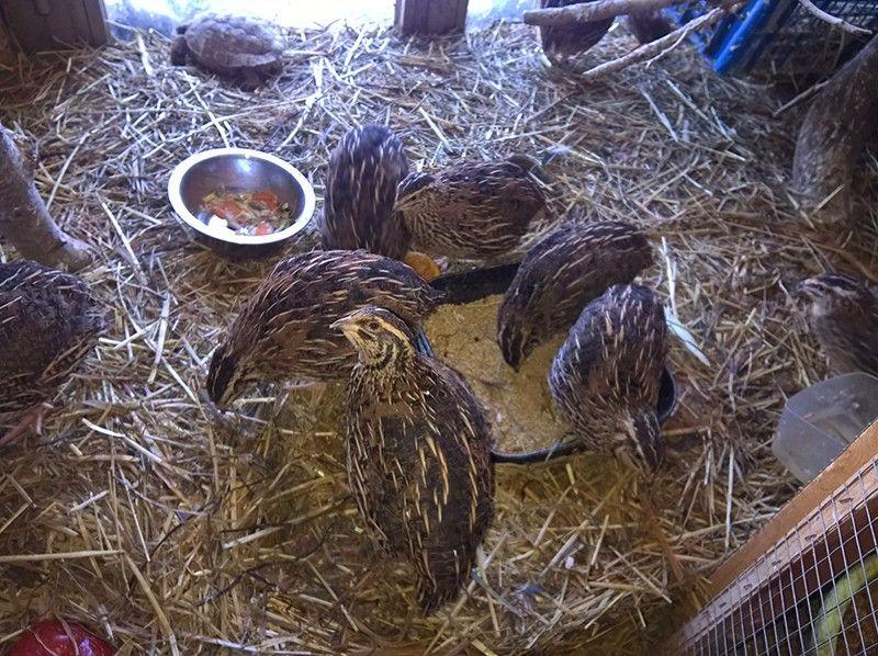 Один мой рабочий день в птицами, Италия, фото 36