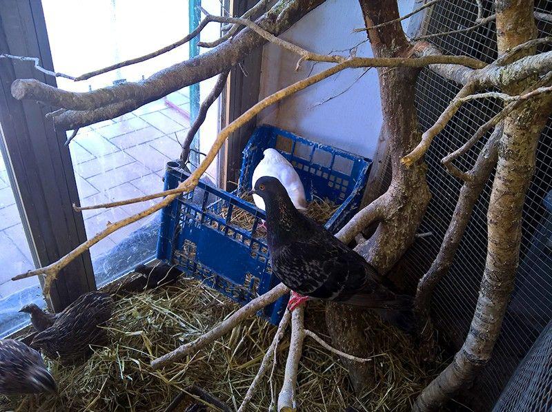 Один мой рабочий день в птицами, Италия, фото 39