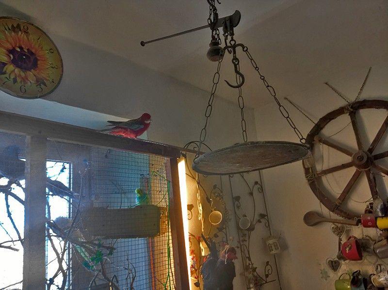 Один мой рабочий день в птицами, Италия, фото 43