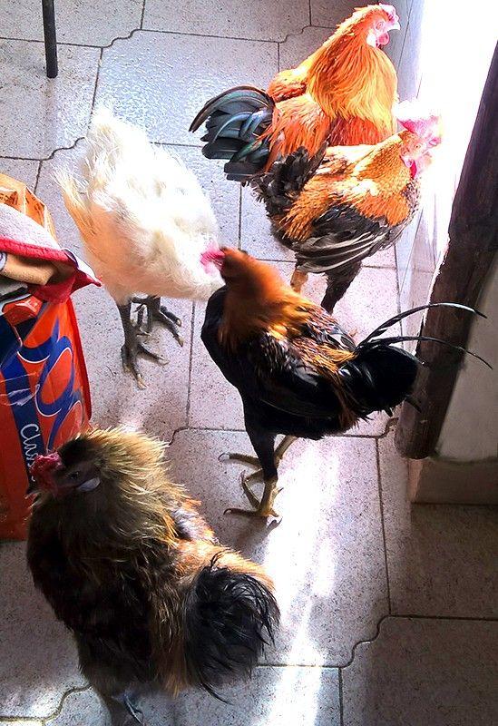Один мой рабочий день в птицами, Италия, фото 62