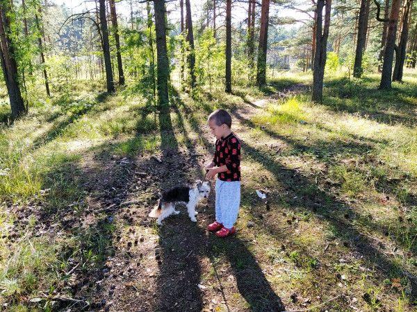 Один мой день в пути, из Санкт-Петербурга в Карелию, фото 16