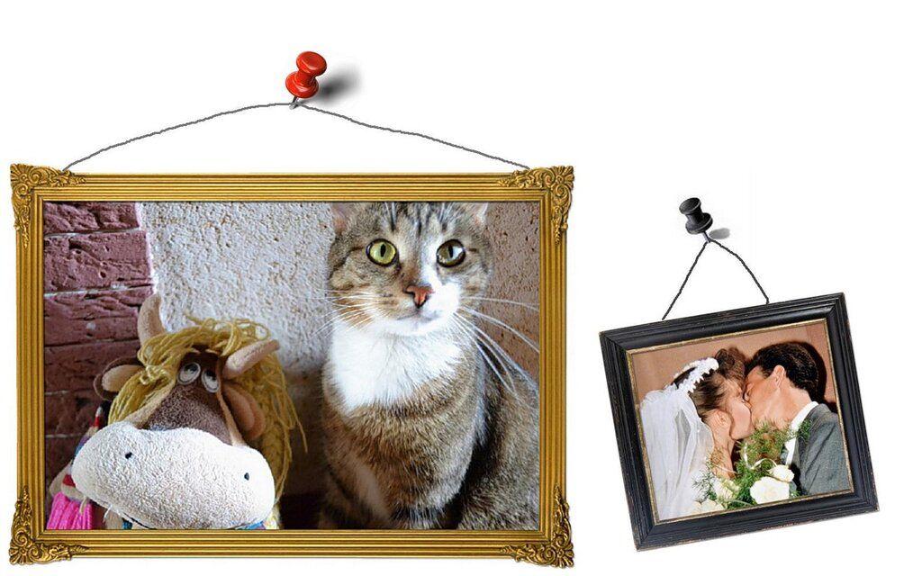 Один день котика, я Рэй, живу с тёлочкой и братанами
