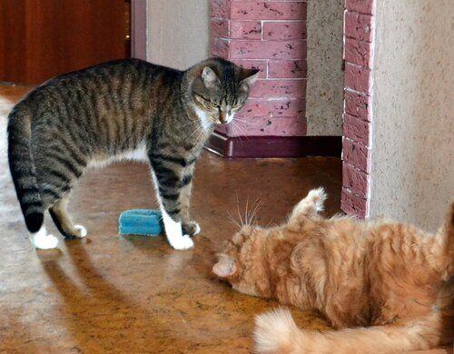 Один день котика, я Рэй, живу с тёлочкой и братанами, фото 12