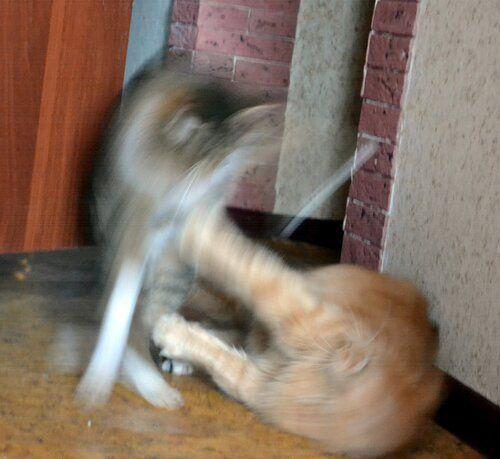 Один день котика, я Рэй, живу с тёлочкой и братанами, фото 13