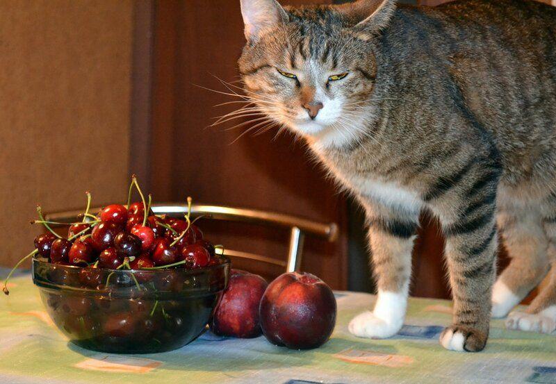 Один день котика, я Рэй, живу с тёлочкой и братанами, фото 16