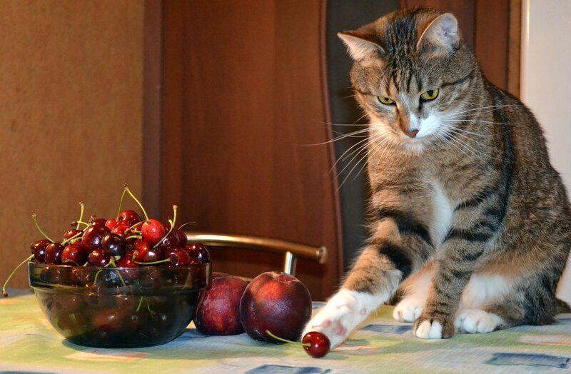 Один день котика, я Рэй, живу с тёлочкой и братанами, фото 17