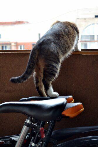 Один день котика, я Рэй, живу с тёлочкой и братанами, фото 18