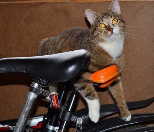 Один день котика, я Рэй, живу с тёлочкой и братанами, фото 19