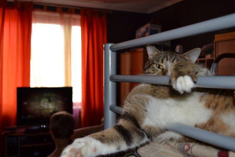 Один день котика, я Рэй, живу с тёлочкой и братанами, фото 22
