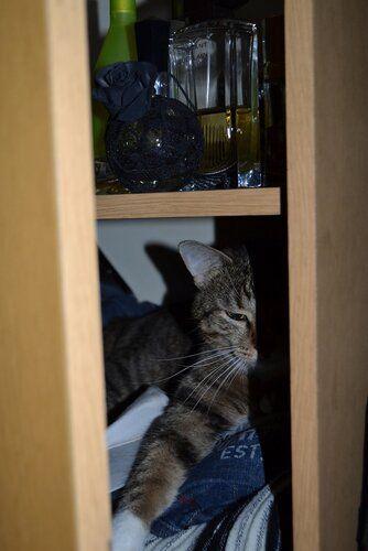 Один день котика, я Рэй, живу с тёлочкой и братанами, фото 23