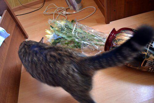 Один день котика, я Рэй, живу с тёлочкой и братанами, фото 27