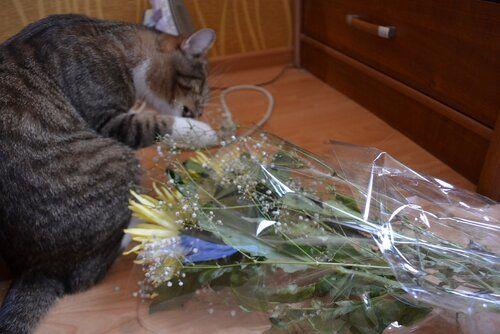 Один день котика, я Рэй, живу с тёлочкой и братанами, фото 28