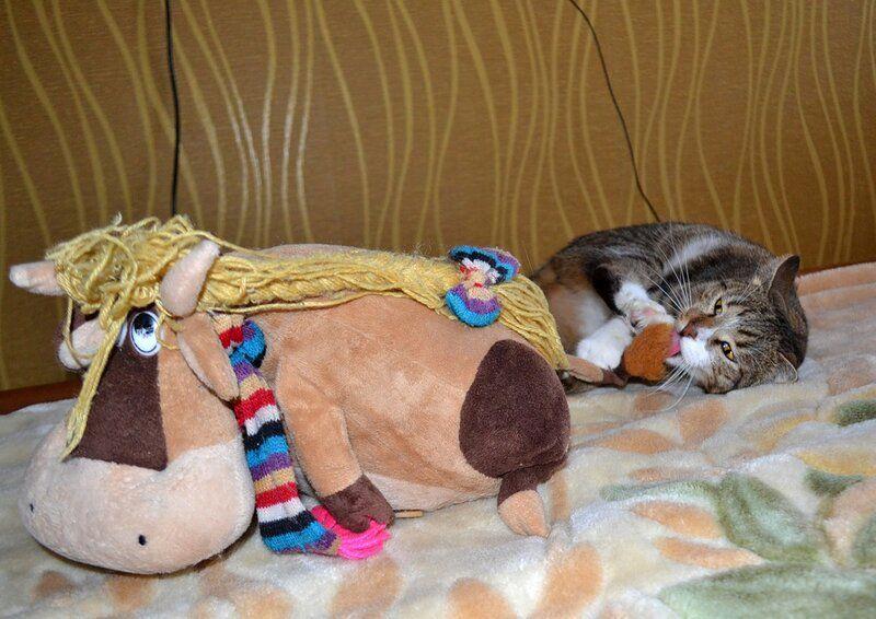 Один день котика, я Рэй, живу с тёлочкой и братанами, фото 3