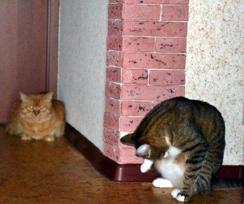 Один день котика, я Рэй, живу с тёлочкой и братанами, фото 30