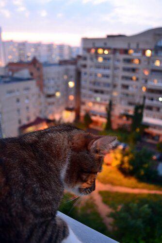 Один день котика, я Рэй, живу с тёлочкой и братанами, фото 32