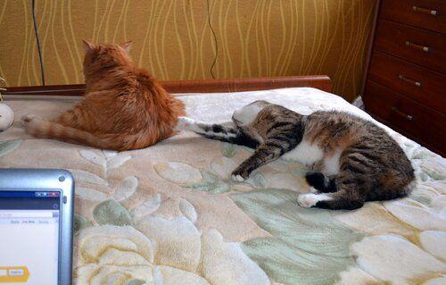 Один день котика, я Рэй, живу с тёлочкой и братанами, фото 35
