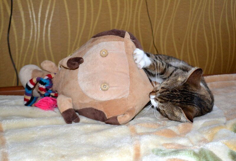 Один день котика, я Рэй, живу с тёлочкой и братанами, фото 4