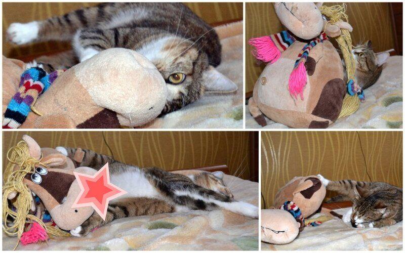 Один день котика, я Рэй, живу с тёлочкой и братанами, фото 5