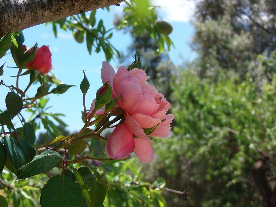 Один мой летний день в цветочном саду, вся семья в сборе, Испания, фото 10