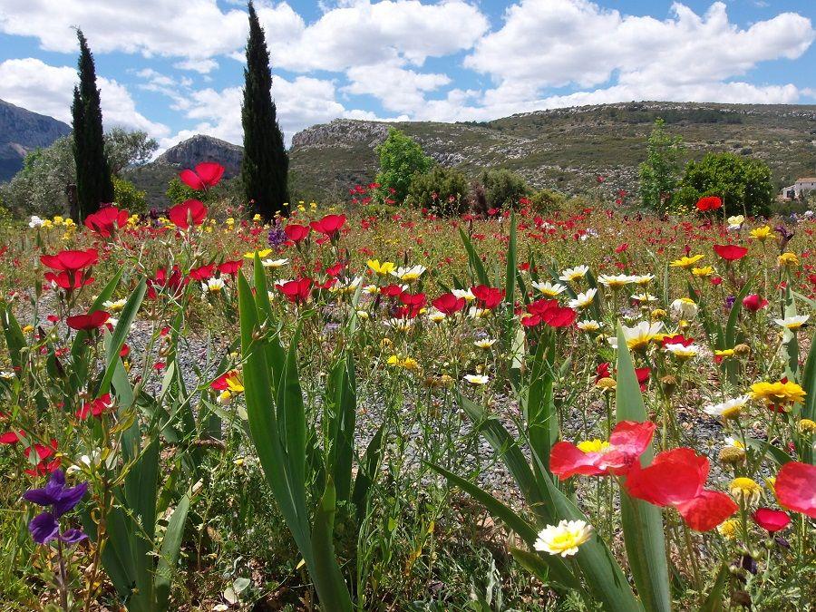 Один мой летний день в цветочном саду, вся семья в сборе, Испания, фото 14