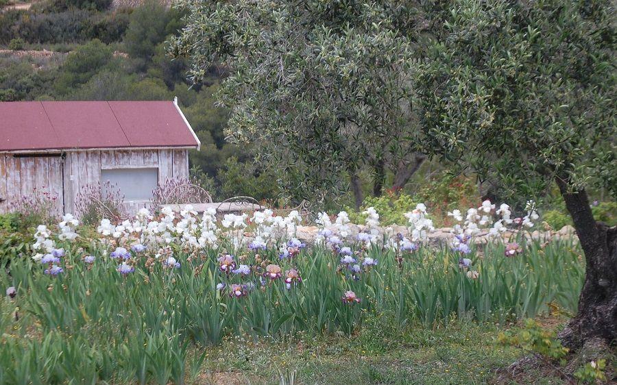 Один мой летний день в цветочном саду, вся семья в сборе, Испания, фото 15