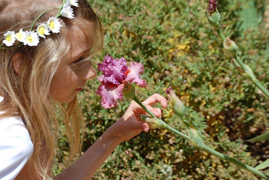 Один мой летний день в цветочном саду, вся семья в сборе, Испания, фото 19