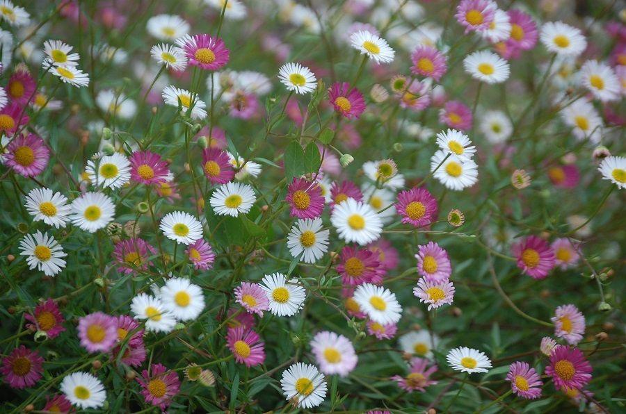 Один мой летний день в цветочном саду, вся семья в сборе, Испания, фото 25