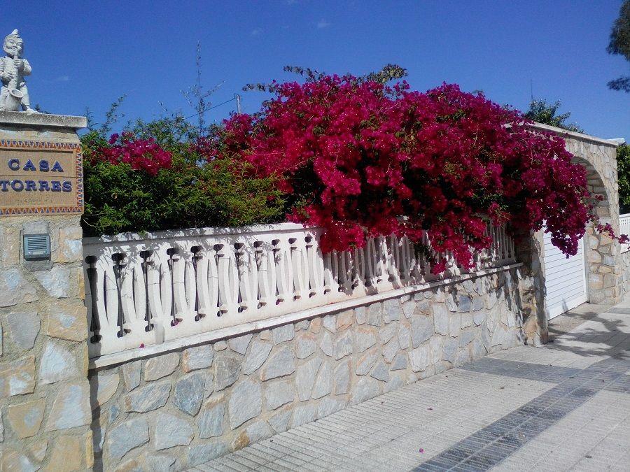 Один мой летний день в цветочном саду, вся семья в сборе, Испания, фото 32