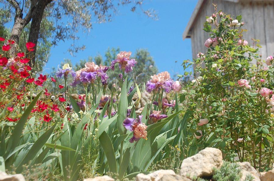 Один мой летний день в цветочном саду, вся семья в сборе, Испания, фото 9