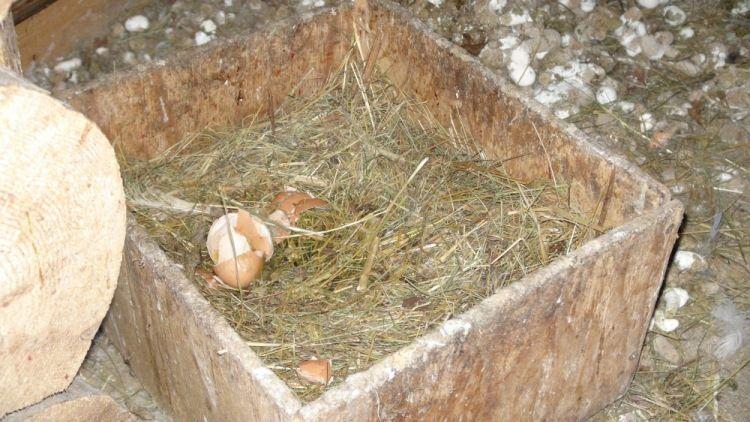 Один будний день сельского жителя, Калужская область, фото 27