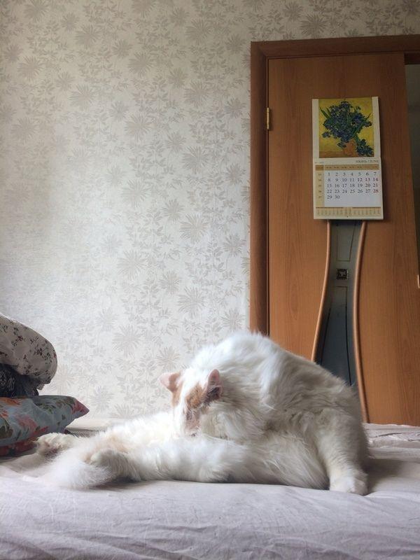 Один день фрилансера, живу с молодым человеком и двумя котами, фото 17