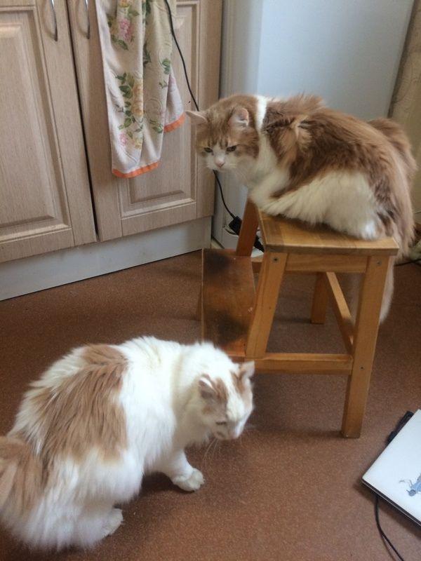Один день фрилансера, живу с молодым человеком и двумя котами, фото 6
