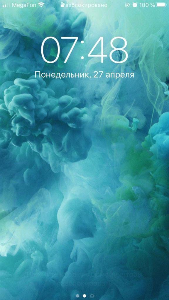 Один мой день на удаленке, в кадре Москва, кошка Бусинда, кот Тихон