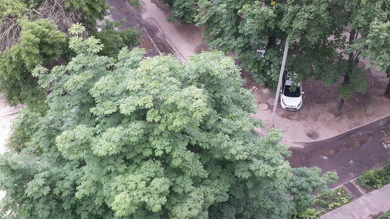 Один будний день молодой мамы и фрилансера, Харьков, Украина, фото 7