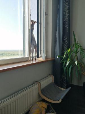 Один мой карантинный день, в посте центр Санкт-Петербурга, дом, работа, фоточки котика, фото 40