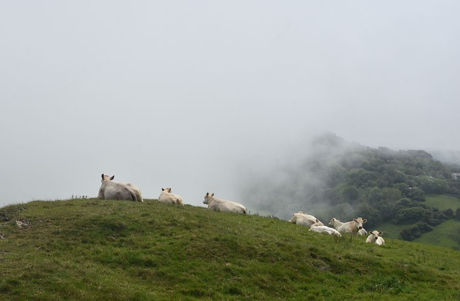 Один летний день проведенный в национальном парке на юго-западе Англии, фото 12