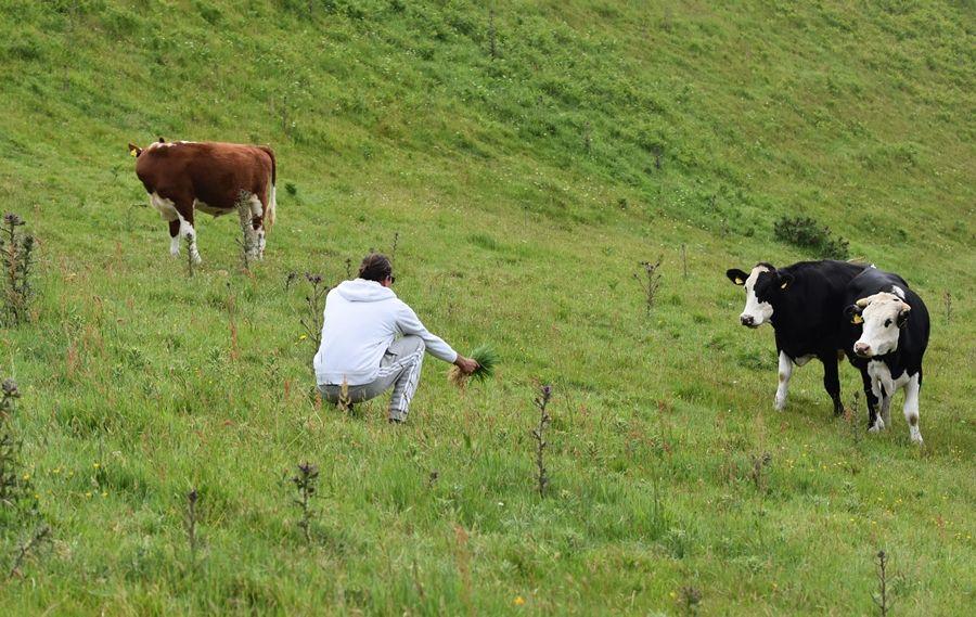 Один летний день проведенный в национальном парке на юго-западе Англии, фото 36