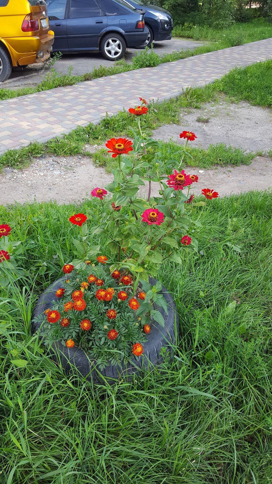 Как я провела свой день рождение, я покажу вам летний Калининград, фото 19