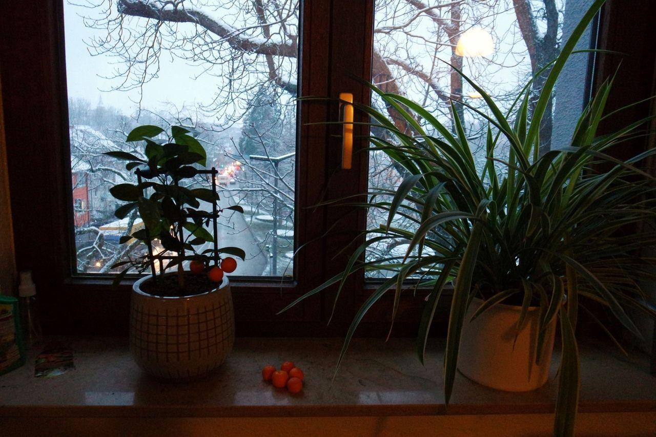 Вспомним зиму. Один мой день в Марбах-на-Неккаре, Германия, фото 8