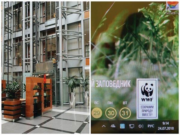 Один рабочий день москвички, я покажу вам свою работу, дом, котика, фото 12