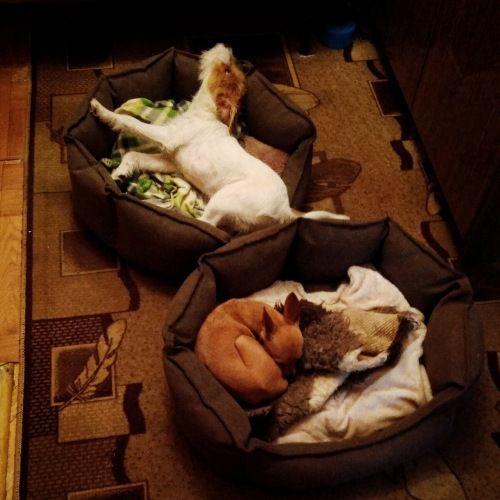 Сегодня я покажу вам как живут двинутые на голову люди, обожающие собак, фото 13