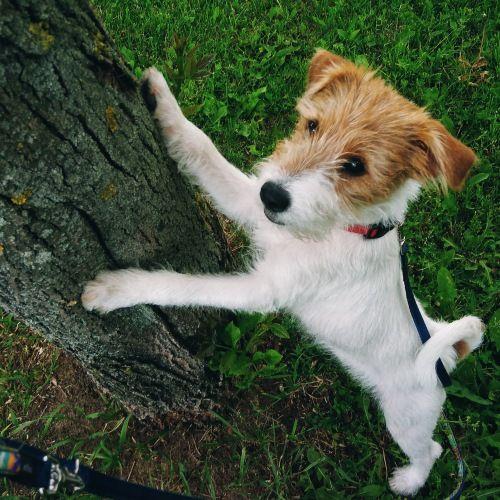 Сегодня я покажу вам как живут двинутые на голову люди, обожающие собак, фото 35