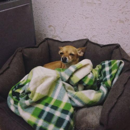 Сегодня я покажу вам как живут двинутые на голову люди, обожающие собак, фото 44